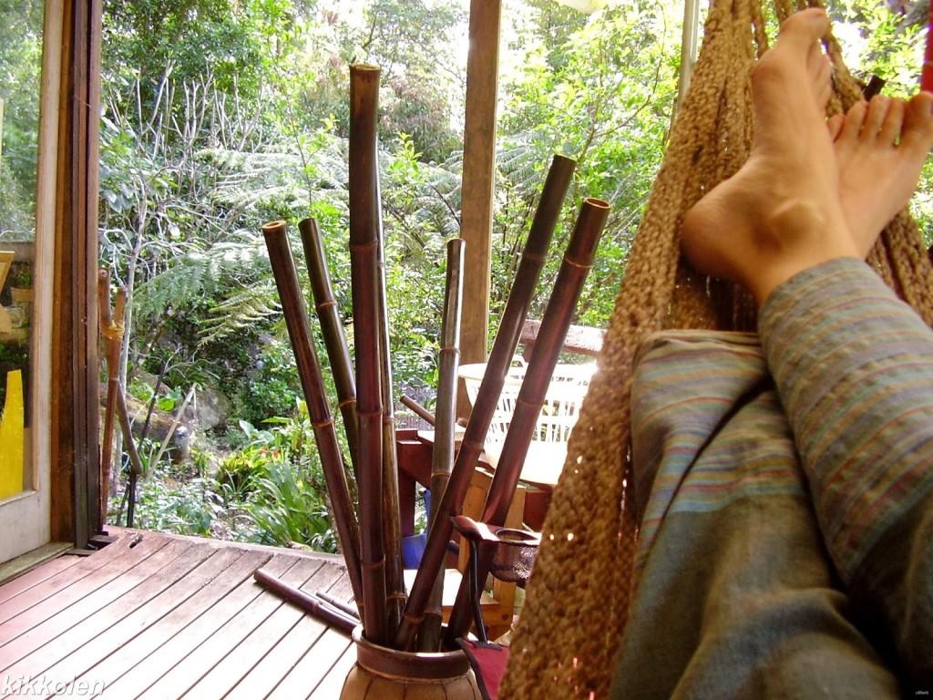 Un'amaca che si affaccia sulla foresta subtropicale: perché no?