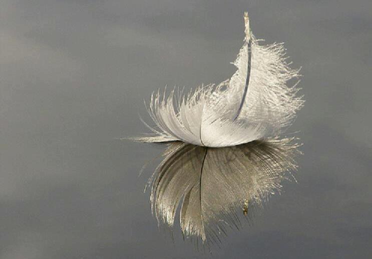 piuma, angelo
